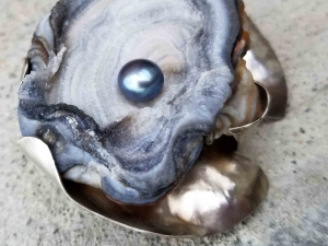Fortunate One - Oyster Brooch