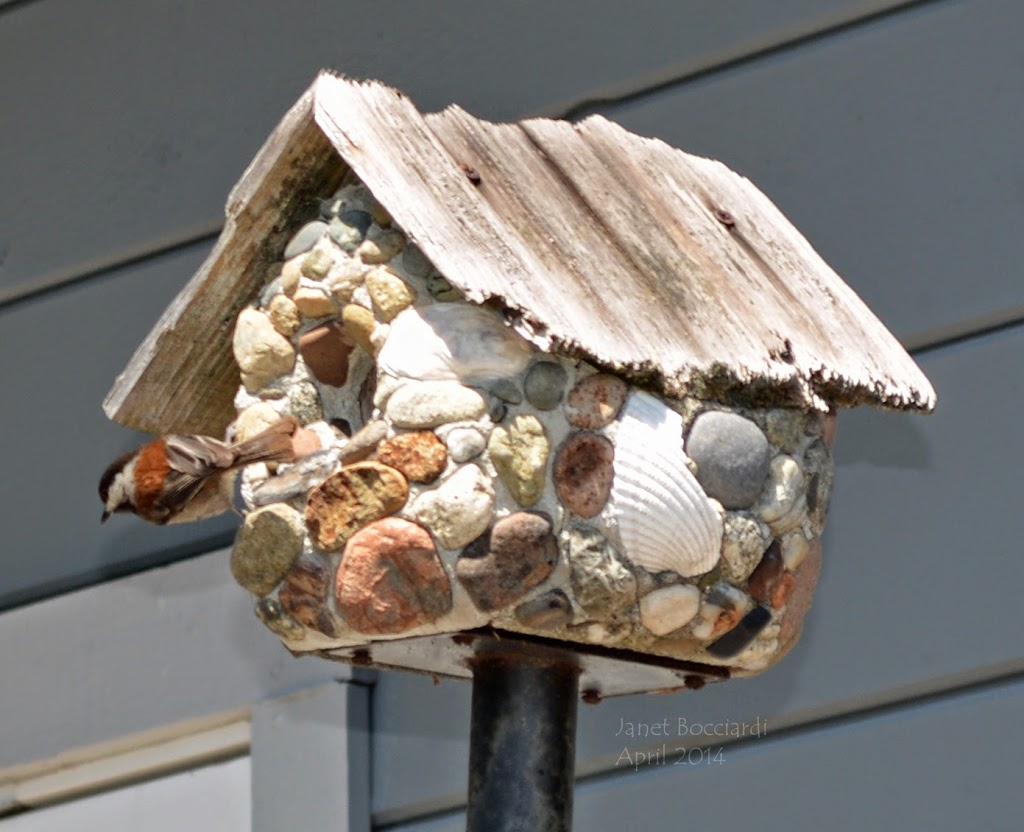 Chickadee checking out birdhouse