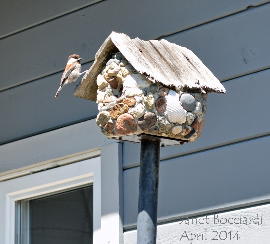 Chickadee checking out bird house