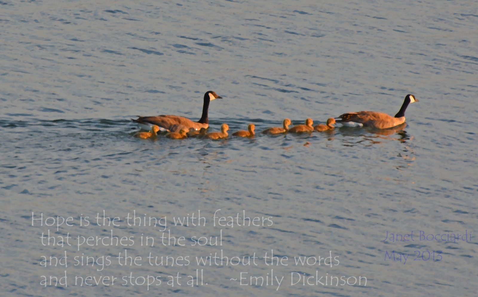 Geese family on lake.