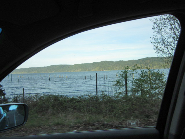 Oyster beds, Hood Canal, Washington