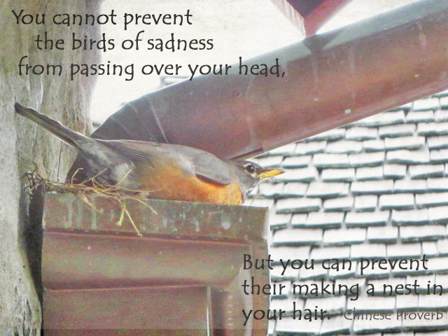 Robin photo with quote
