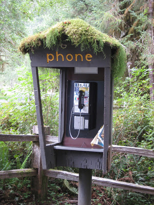 Phone booth at Hoh Rain Forest